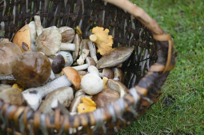 Atenție la intoxicațiile cu ciuperci